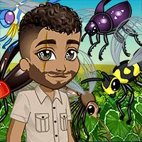 Une invasion d'insectes !
